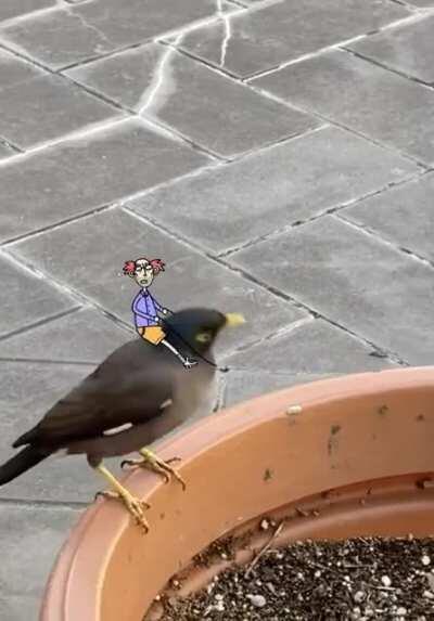 My mate Boris has a new bird
