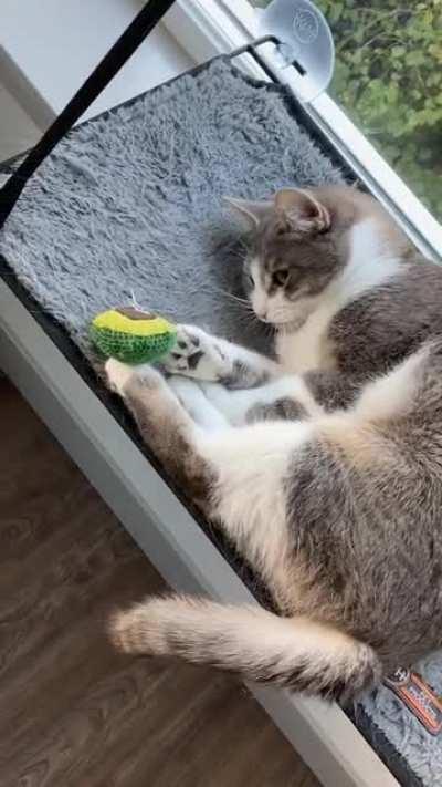 CatsISUOTTATFO