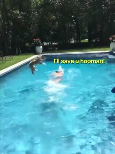 My hooman needs me
