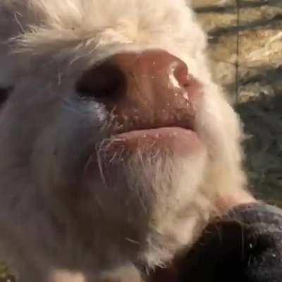 Fuzzy pasture pupper chin scritches