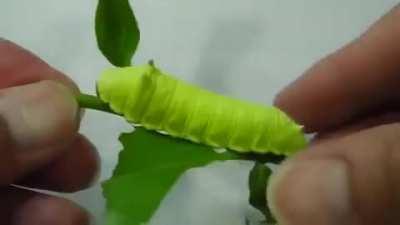 Squeaking Caterpillar