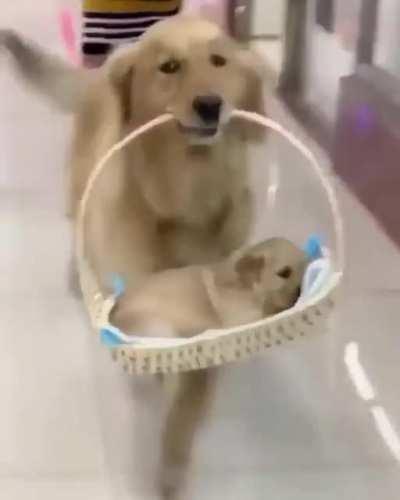 Proud Parent Presenting Pretty Pupper