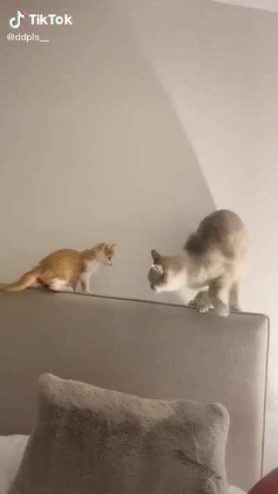 "Cat says ""yeet"""