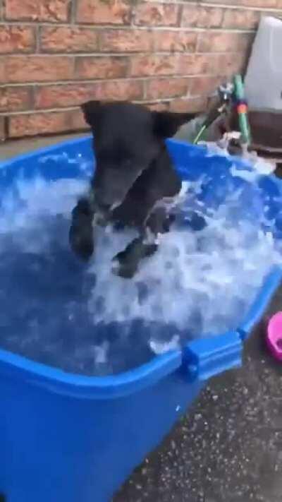 Practice to swim!! I am a good boy