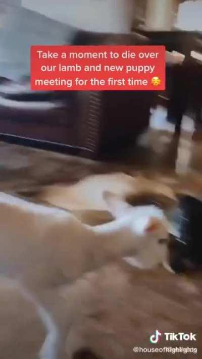 When you meet your best friend!