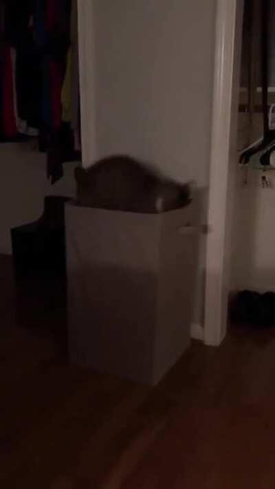 Cat discovers a portal to a new dimension