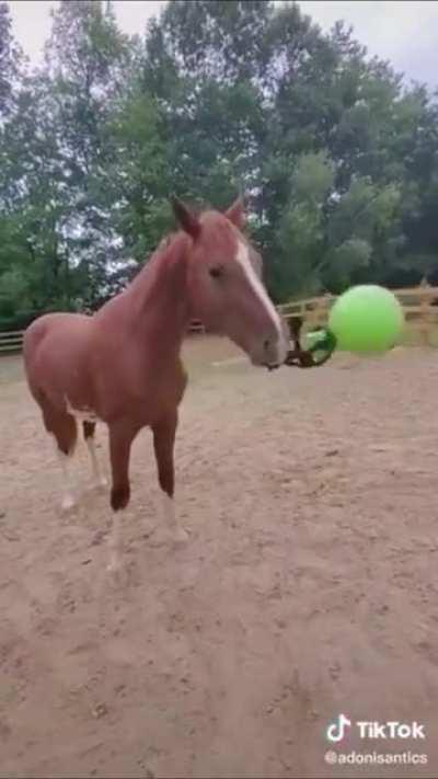 Haha horse go throw ball weeeee