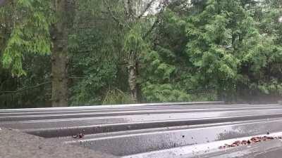 Summer rain on Canadian tin roof