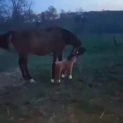 The reaction of the horse that realizes that it is a toy.