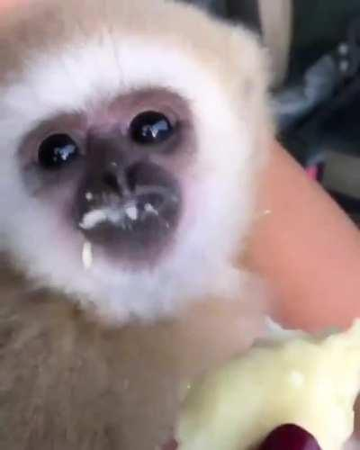 no joke just monkey eating