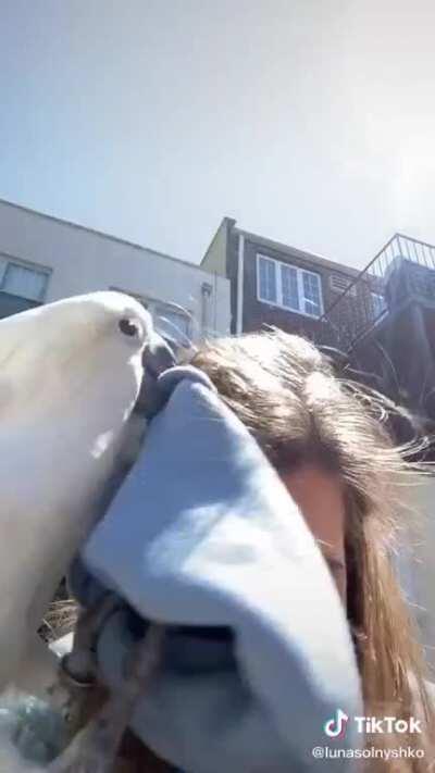 Parrots seem a fun pet