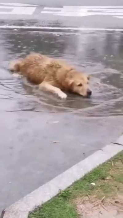 rain doggo
