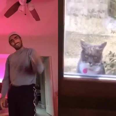 Where do I find this cat?