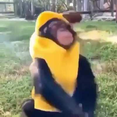 Mono platano mono platano