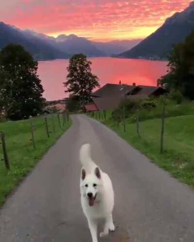 Doggo and a sunset