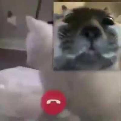 *Gato bailando*