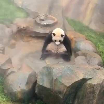 A panda sitting in a pool twiddling its legs