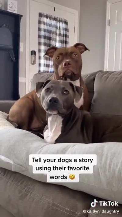 Telling dogs a story using their favorite words