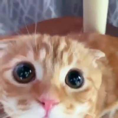 Such a cute face