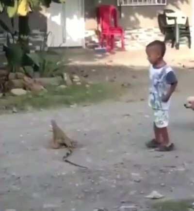 WCGW going near this iguana