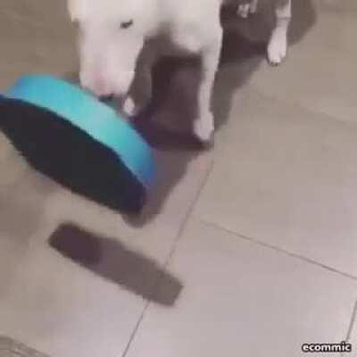 WCGW seeing a very legit healthy dog food bowl online when you ACTUALLY give it to your dog
