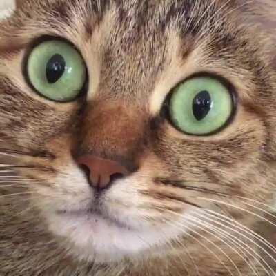 Cats' Eyes Dilate When They Hiccup