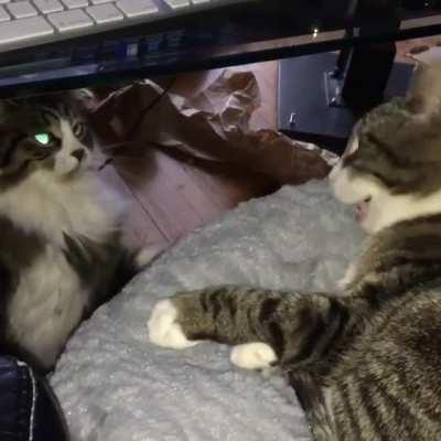 CatSlaps