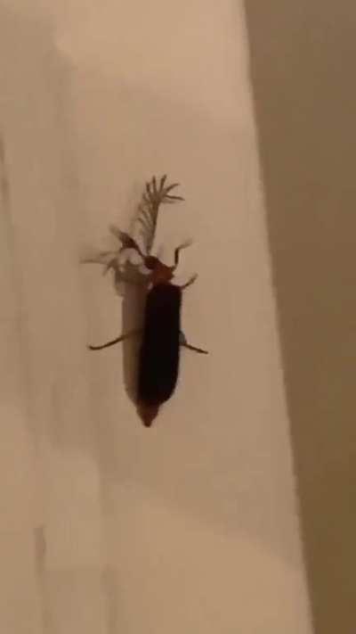 The Eyelash Bug!