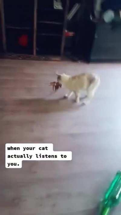 When your cat finally listens to you
