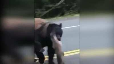 🔥 Mama Bear Carrying a Salmon while Crossing the Street