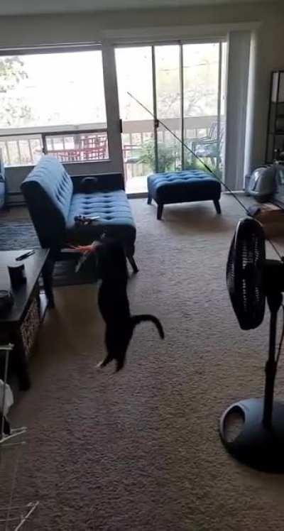 Cat not letting you focus? Improvise. Adapt. Overcome.