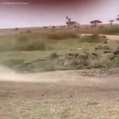 Gazelle Jukes Lion Into Another Dimension