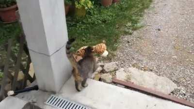 This cat borrowed a plushie from her neighbor and brought it home