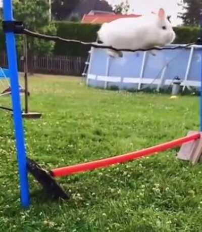 Bunny Got them big boi hops