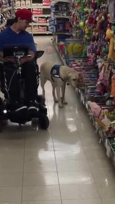 Service dog gets to pick his own toy