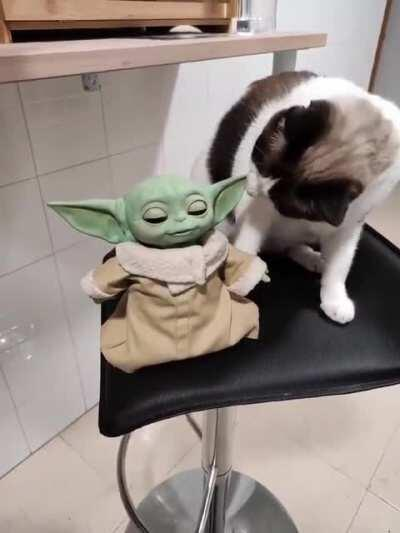 Cat tries to kill a poor baby