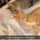 New kitten plus grumpy girl slowly warming up