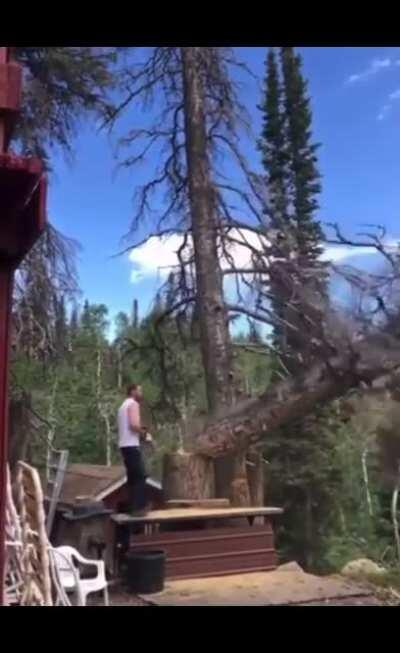 WCGW while cutting down a tree