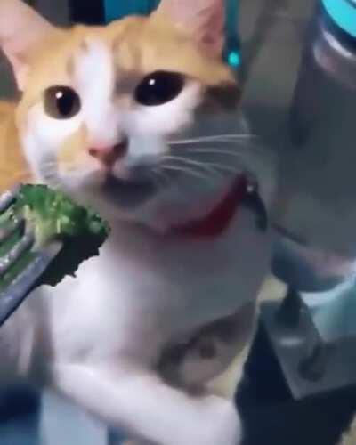 Broccoli, meet cat
