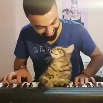 This Cat Becomes Overly Affectionate When Its Owner Plays the Piano