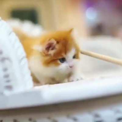 Cute thing 😻