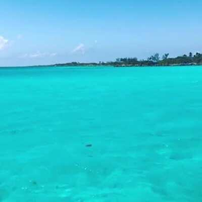 Still can't get over this water...Blue Lagoon Nassau Bahamas