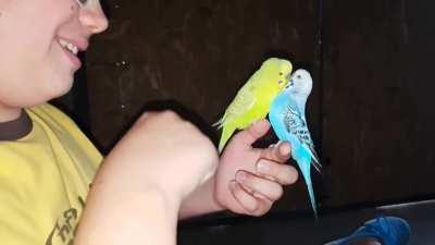 When my parrot is angry