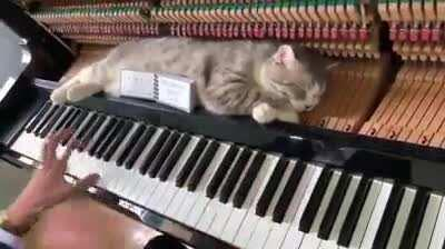 Cat lovers piano