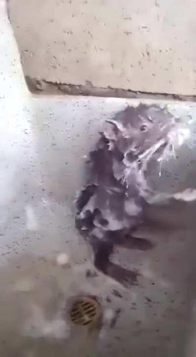 [50/50] People cooking and eating rats in Asia [NSFW/L] | A rat with good personal hygiene [SFL]