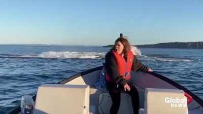 Seeing a whale for the first time