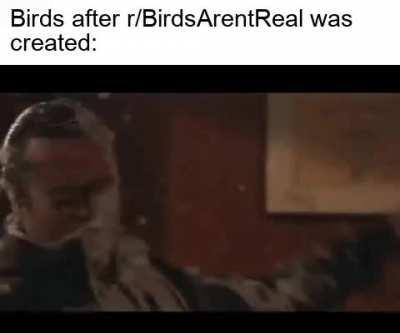 So long, birds