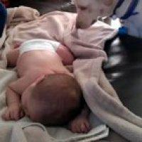Dog covers up sleeping baby with a blanket