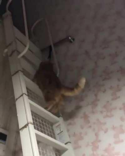 Bouncing cat