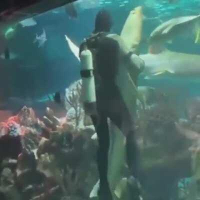 dancing with a shark?